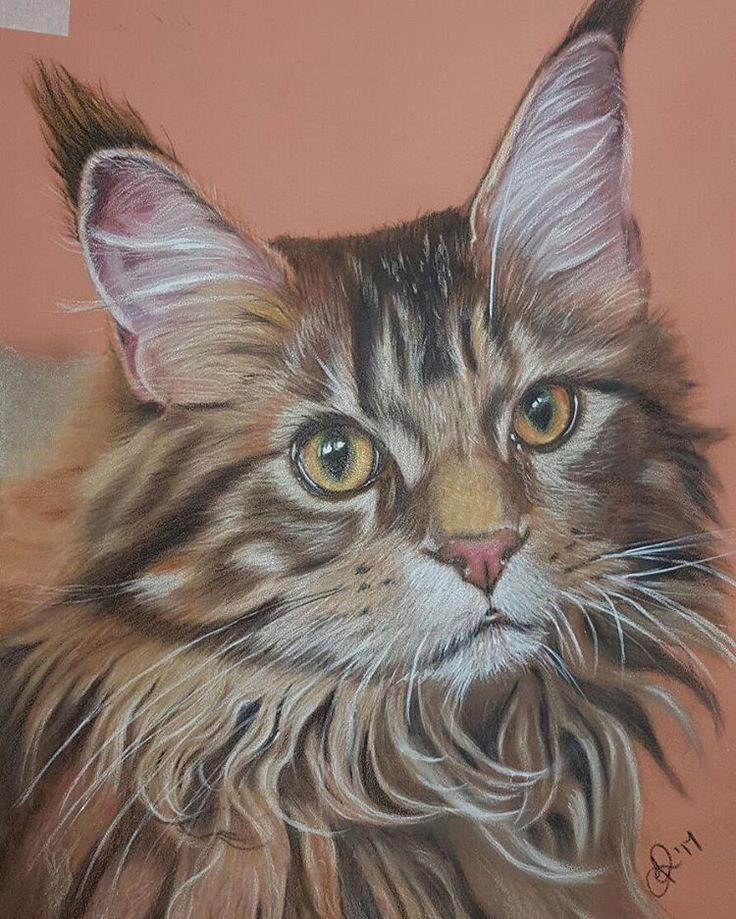 He's done :) still needs a name though folks! #art #artist #artyjo #joannerowlandart #Consett #animalcreatives #fabercastell #polychromos #artoftheday #drawing #cp_art #artstagram #felines #catsofinstagram #catportraits