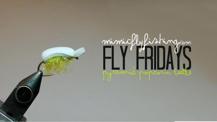 Fly Fridays: The Pyramid Popcorn Beetle