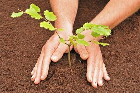 For my birthday I want to plant a tree. Maybe a Gingko biloba tree...or a olive tree