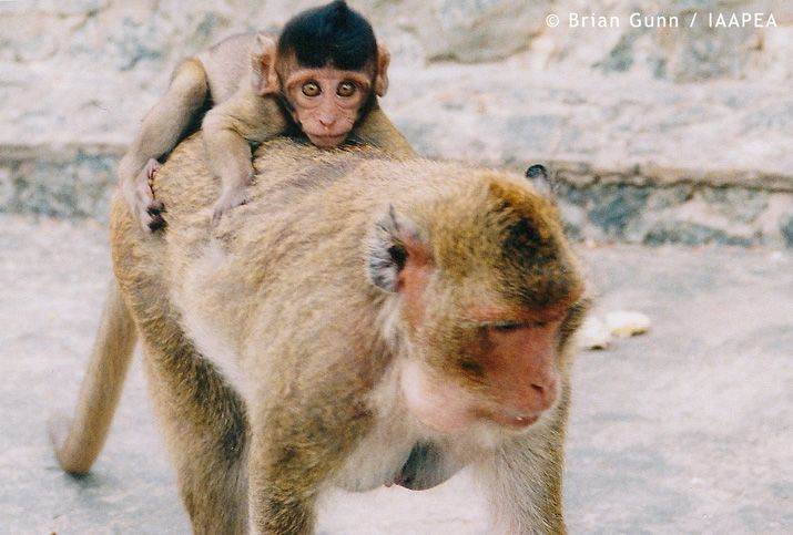 Monkey Picture Animal Testing Statistics Information, Pros and Cons, Facts And Figures, History, Alternatives