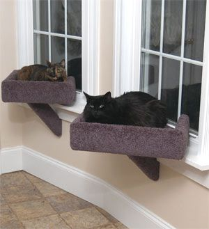 Ideal Cat Window Perch! Even in purple:( #cats #CatPerch