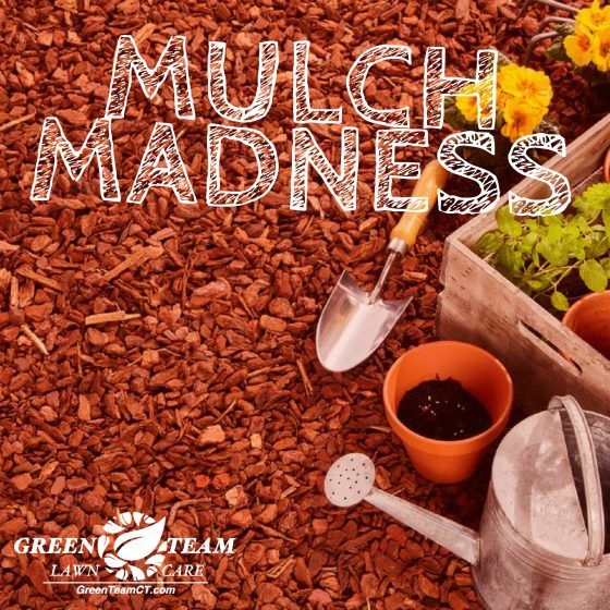 Mulching your flower beds and garden is a popular lawn care task this time of year. The problem is, most people apply mulch too late in the season, lessening its benefit. To understand the logic behind this theory, the experts at Green Team Lawn Care...