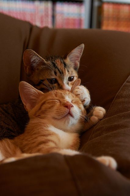 While you're snoozing, I'm gonna play with your ear <3