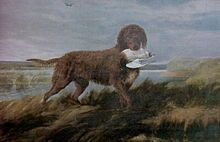 """Water Spaniel"" (most widely accepted image of Tweed Spaniel) Other names; Tweed Spaniel, Ladykirk Spaniel. The Tweed Water Spaniel had a long tail and a curly, liver-colored coat, and looked similar to the Irish Water Spaniel except that it had a heavier muzzle and a pointed skull. The dog also had thick, slightly feathered, hound-like ears, droopy lips, and forelegs that were feathered, but hind legs that were not.Their size was that of a small retriever."