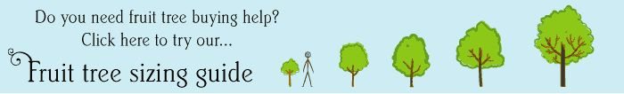 A quick and easy guide to finding the right sized tree for any home or garden!