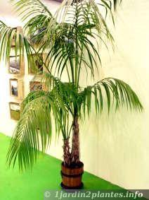 Les 103 meilleures images propos de 123 sur pinterest for Maladie palmier interieur