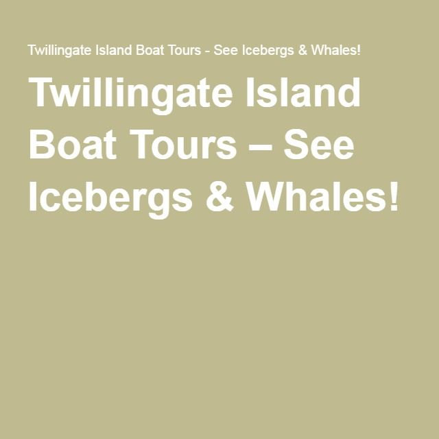 Twillingate Island Boat Tours – See Icebergs & Whales!