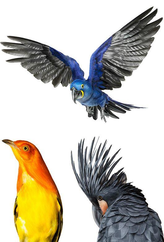 Bird: Beautiful Photography by Andrew Zuckerman via The Inspiration Grid