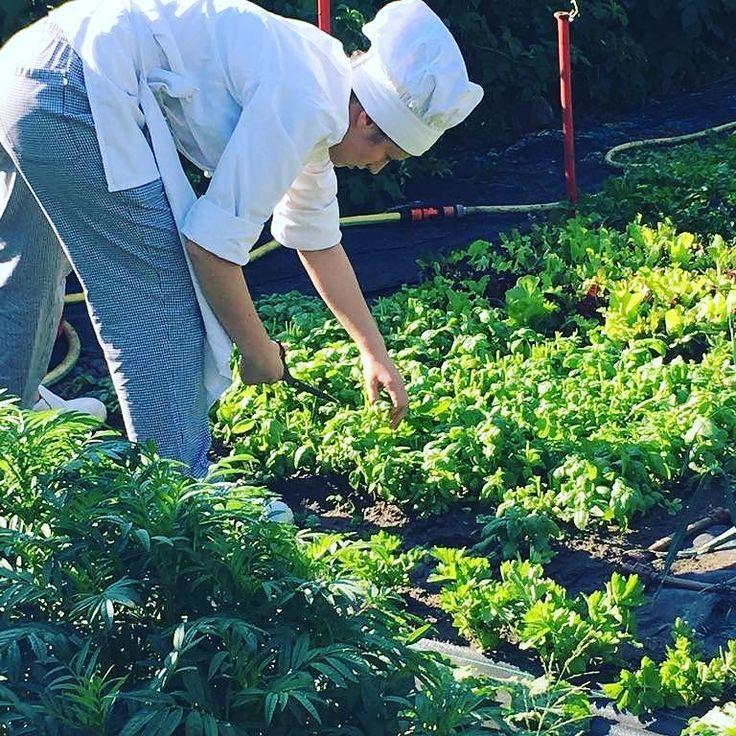 It'time for #pesto  #km0 #instagood #helthyfood #foodpic #greenarea #vda #chezhcdc #nature