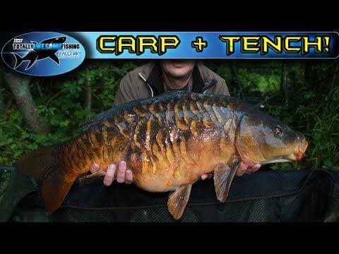 Carp and Tench Fishing Tips | TAFishing - YouTube