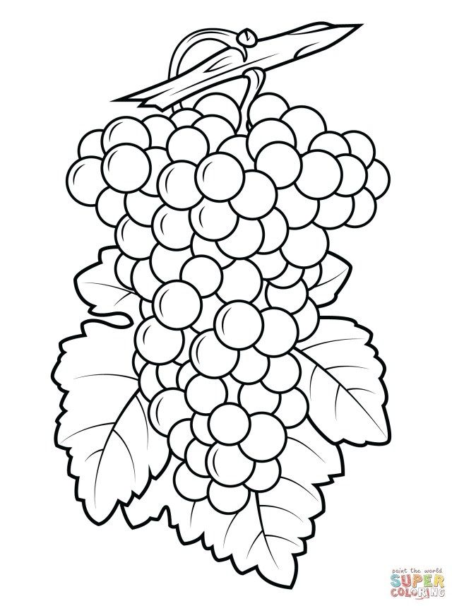 Pretty Photo Of Grapes Coloring Page Albanysinsanity Com Fruit Coloring Pages Free Coloring Pages Vine Drawing