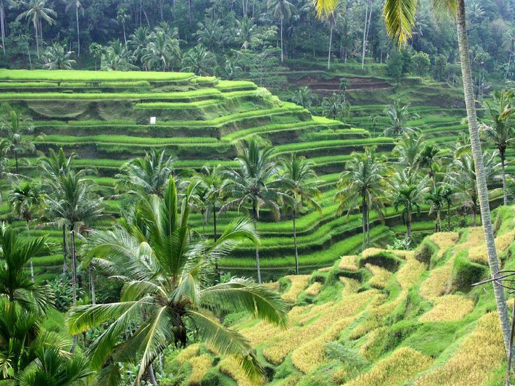 Sengkedan dari Bali