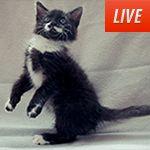 24 hour kitten cam.... Goodbye productivity