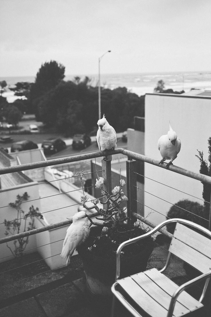 Melbourne-Lorne-Wedding-Photographer-Lucinda-Andrew-023