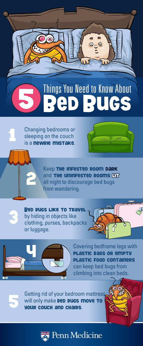 11 best bed bugs images on Pinterest | Bed bugs, Home remedies and 3 ...