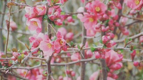 Pink beautiful flowers