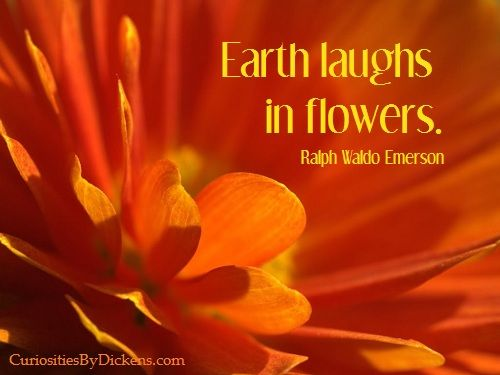 Earth laughs in flowers. ~Emerson | via Curiosities by DickensOrange Colors, Beautiful Flower, Orange Things, Angels Singing, Emerson Quotes, Orange Flowers, Ralph Waldo Emerson, Beautiful Orange, Earth Laugh
