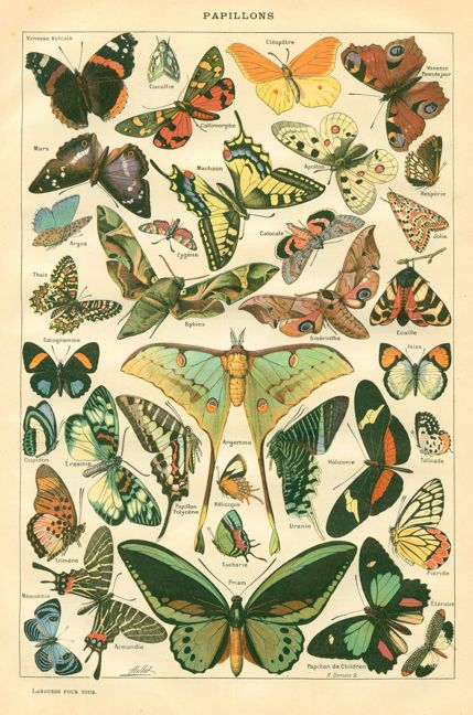 vintage botanical prints - butterflies. Love that Luna Butterfly with the tails in the middle.