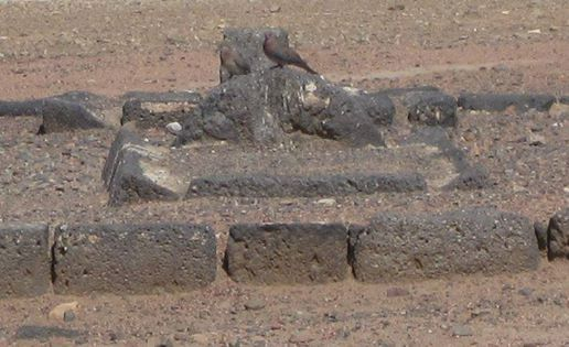 Grave of Hamzah ibn Abdul Mutholib, uncle of Rasulullah SAW
