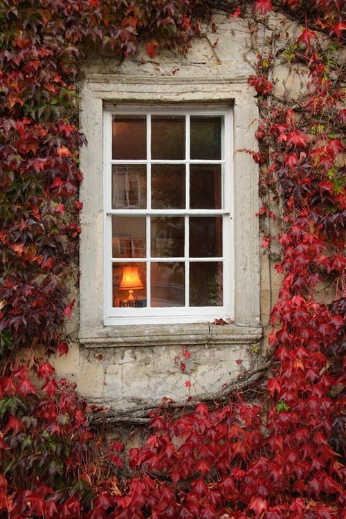 Ivy Window, Paris, France photo via marina