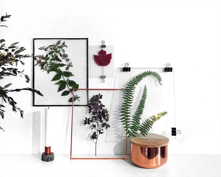 les 26 meilleures images du tableau herbier sur pinterest herbier botanique et feuilles. Black Bedroom Furniture Sets. Home Design Ideas