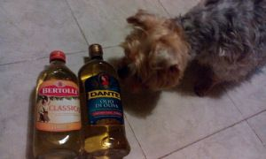 BEI sniffing my two favorite Italian #OliveOil Brands - #ItalianFood