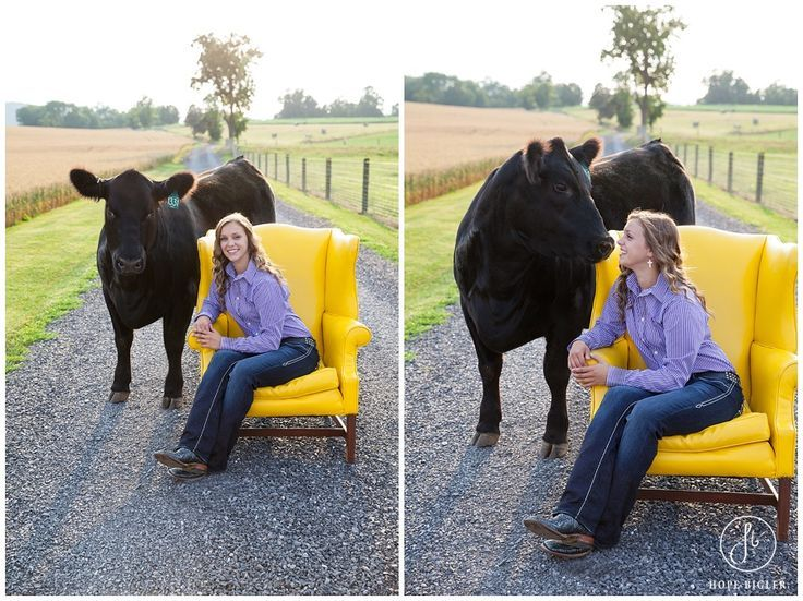 Country Girl Senior Pictures. There is no bond like a bond between a girl and her show steer!