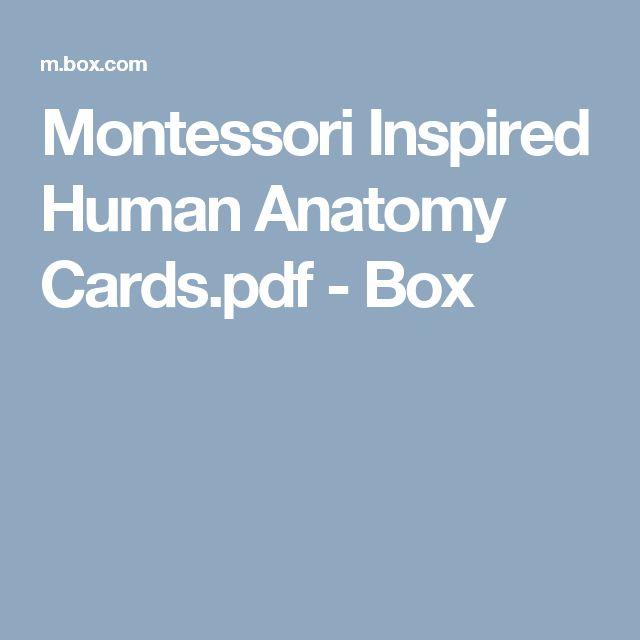 Montessori Inspired Human Anatomy Cards.pdf - Box
