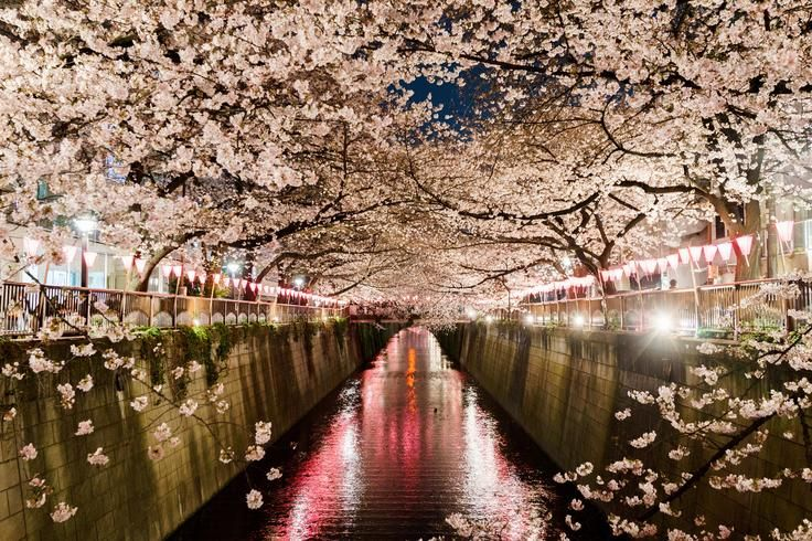Sakura river Photo by Takeo H. - 2016 National Geographic Travel Photographer of the Year