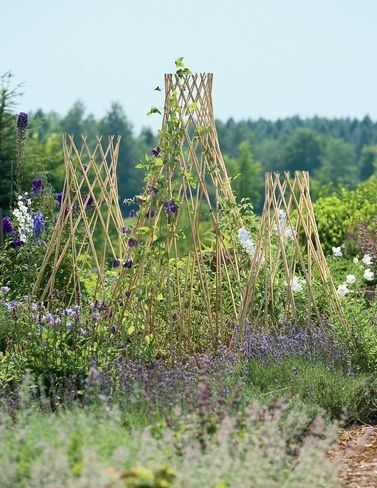 Expandable Willow Trellis, Small by Gardener's Supply. $16.95. Over time, willow will turn silver-gray. Made of natural peeled willow. You'll appreciate the versatility of these natural willow trellises in the garden. These plant supports expand and contract like an accordion, so they can be set up as squat or as tall as you like. The peeled willow and diamond shaped openings make these tepees a graceful, natural accent.