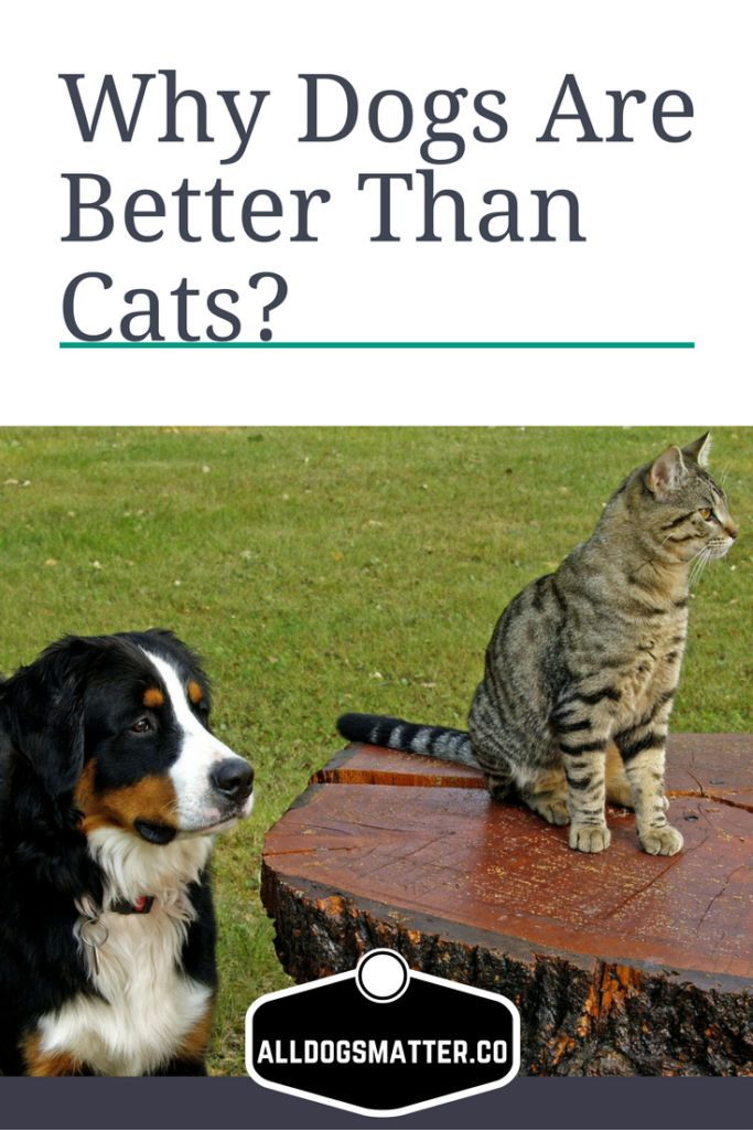 dogs are better pets than cats There will always be a heated debate when the question of which makes a better pet between cats and dogs arises in this hot topic, humanity is divided into two, namely the die-hard dog.