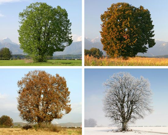 Met Office Autumn News Blog: Defining the Seasons: Meterological Vs Astronomical Seasons. ''Seasons are fundamental to how we understand the UK climate and the environment around us, but how do we define when they start and end? In meteorological terms...each season is three months long..astronomical seasons...are about three weeks behind the meteorological ones...''.