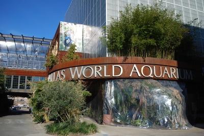 25 Best Ideas About Dallas World Aquarium On Pinterest