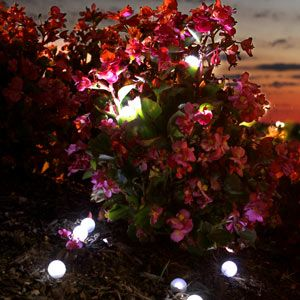 Fairy Berrie Lights