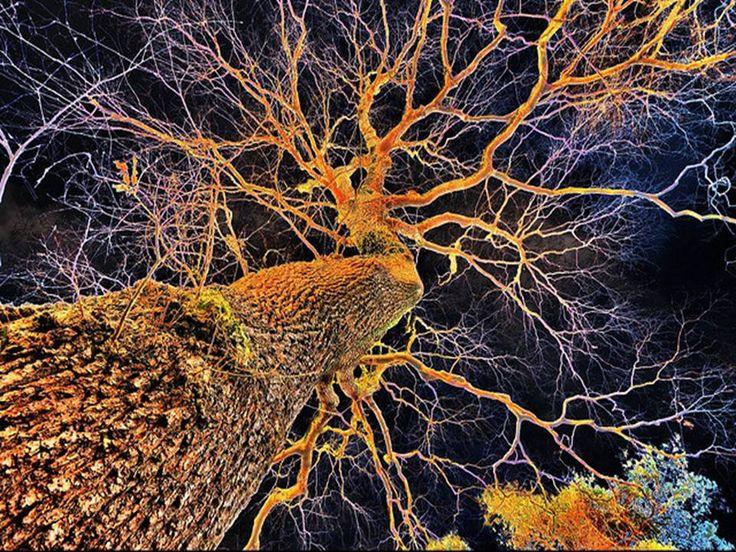 Tree Neuron concept