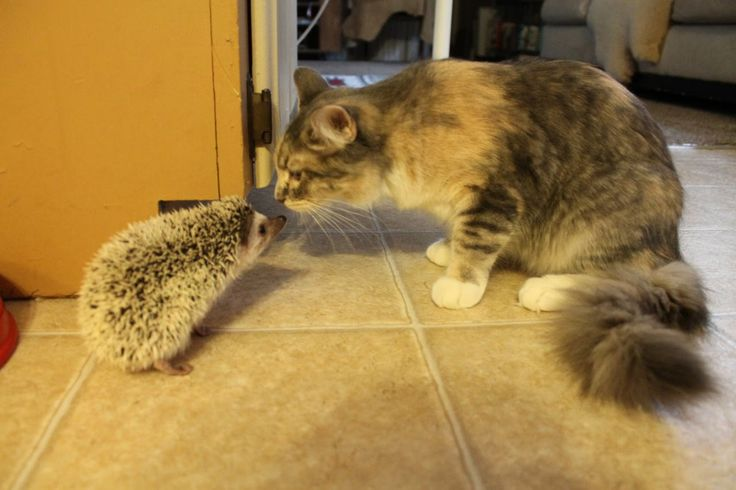 Cute cat and kittens meets Hedgehog - cute animals videos compilation