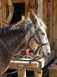 Image result for dapple grey horse and neddy the donkey