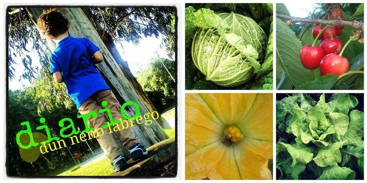 Queréis ver nuestra huerta y saber lo que se puede cultivar en otoño.