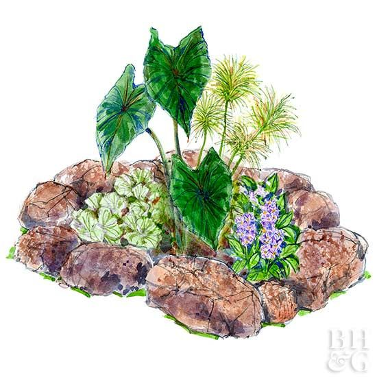 Put in a small pond and enjoy a stunning display with this great 7-by-7-foot small garden plan. Filled with tropical plants, it looks great all summer long.