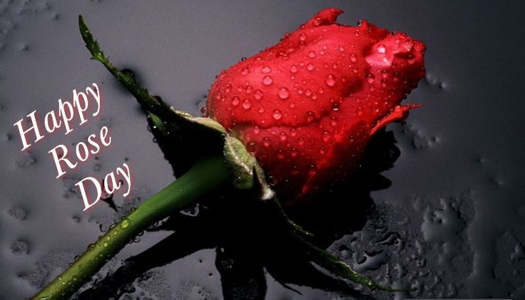Happy Rose Day Shayari 2016