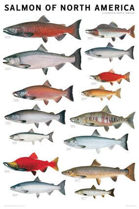 17 best images about fishing oregon on pinterest nice for Best fishing in pa