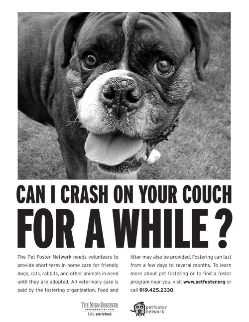 foster network: Animal Lovers, Help Foster, Boxers Dogs, Adorable Boxers, Dogs Aww, Boxers Flyers, Foster Network, Dogs Foster, Homeless Pet