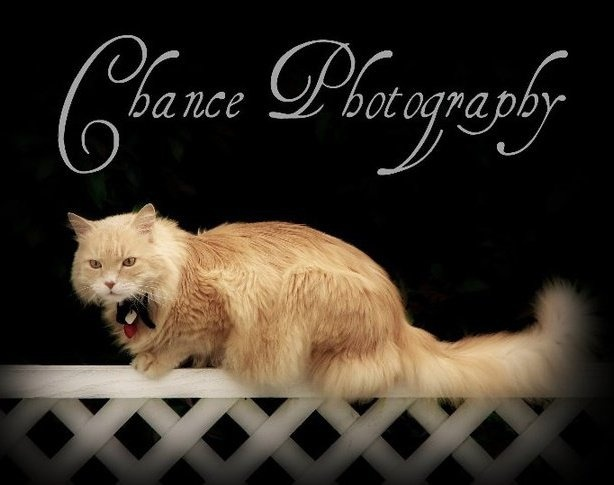 """ My Peanut ~ Chance""    Photo taken by Chance Photography Canada"