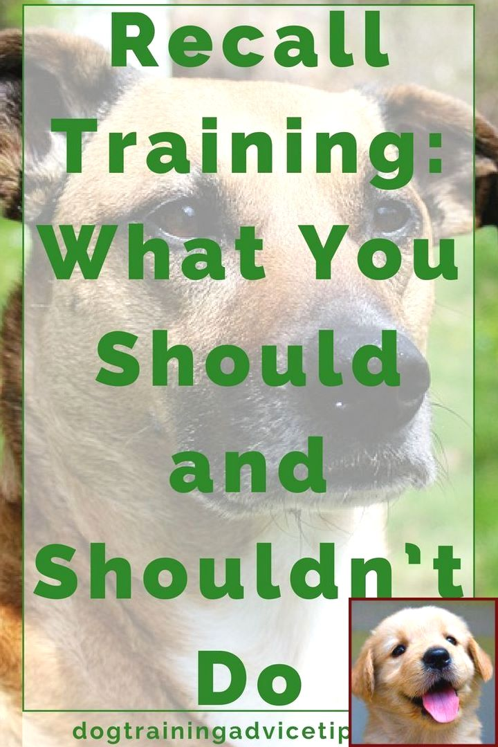 House Training A Puppy Classes And Dog Training Courses In Kerala