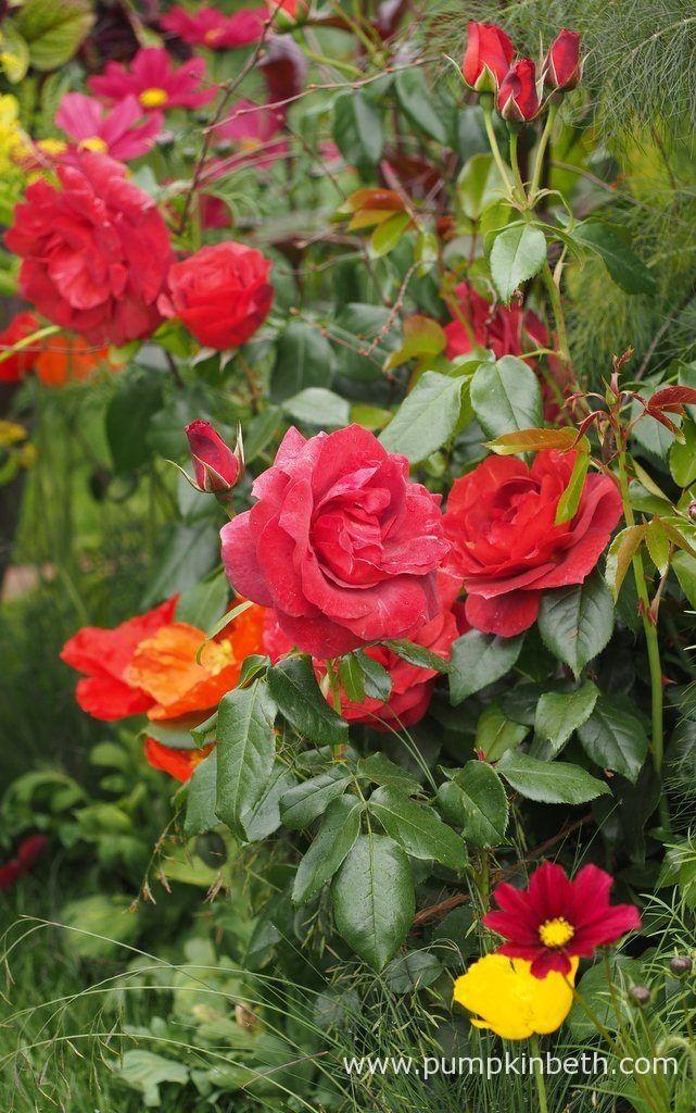 The Anneka Rice Colour Cutting Garden - Pumpkin Beth