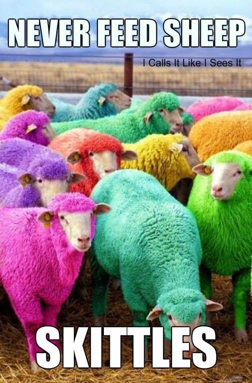 colorful sheep humor