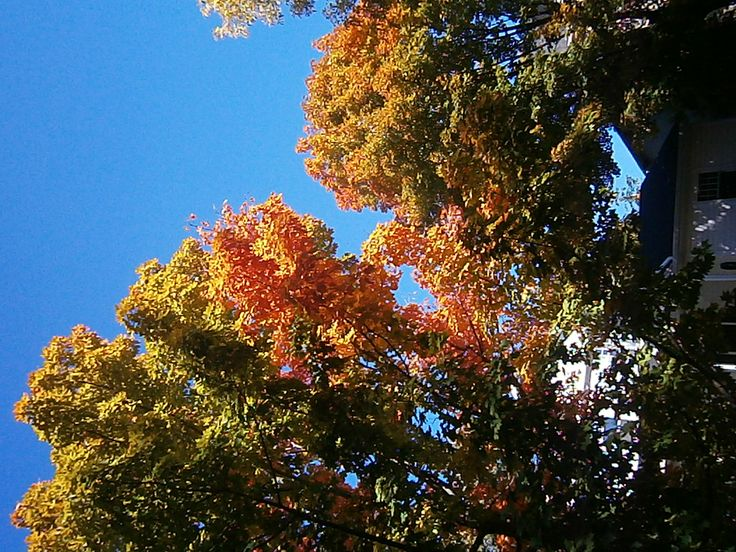 Fall colors in Toronto, which way is up? http://babybirdguide.com/guide-to-toronto/