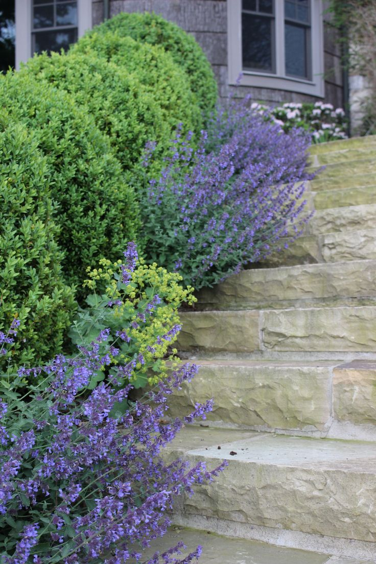 Boxwoods, Catmint, and Lady's Mantle by Floralis | Gardens