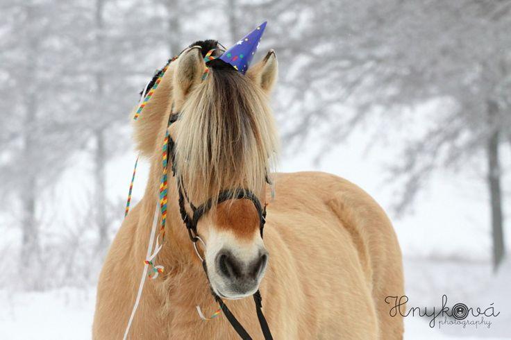 Koňský Silvestr (JA ZOFI - leden 2013)