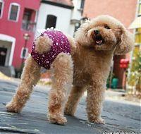 Одежда для маленьких собак - одежда для собак маленьках пород интернет магазин DoggyBandanas.ru